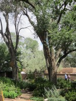 Garden & Coop Tour 2013 - Big Cottonwoods