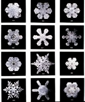 Snow Flakes