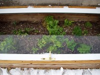 Snowy Coldframe with Winter Greens