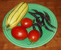Delicata Squash, Amish Paste Tomatoes and Purple Pod Beans