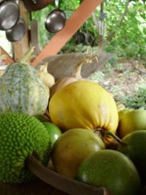 WWOOF Hawaii - Tropical Fruit
